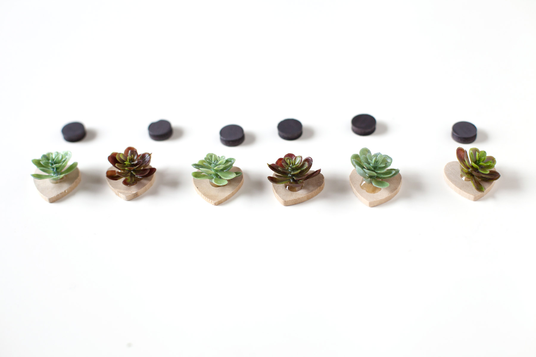 DIY Succulent Magnets | Alyssa & Carla